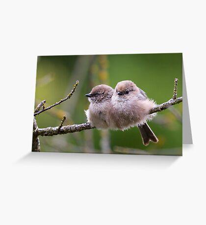 Bushtit Siblings Greeting Card