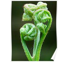 Fern Rarnwedel Roll Out Green Plant Poster