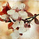 Flowering Plum by Lynn Starner