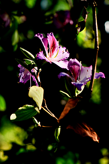 Purple blossoms down by the river by Jaxybelle