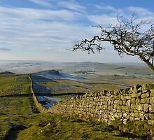 Hadrian's Wall Path on Winshields Crag by Joan Thirlaway