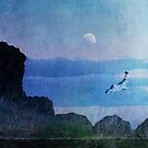 Dance by the light of the moon by Lynn Starner