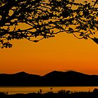 Tree in sunset by Karen Marr