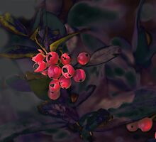 Berries in Purple Shadows  by Susan Werby
