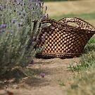 Loess Hills Lavender Farm by Jean Martin