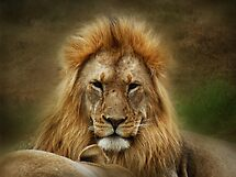 King of the Jungle  ( Leo Panthera ) by Johanna26