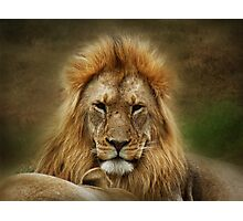 King of the Jungle  ( Leo Panthera ) Photographic Print