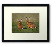 Hares Have Ears Framed Print