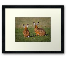 Hares Have Ears Framed Print