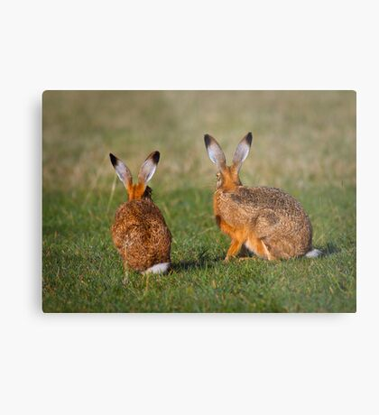 Hares Have Ears Metal Print
