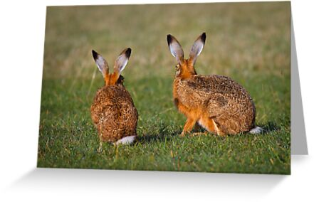 Hares Have Ears by Patricia Jacobs CPAGB LRPS BPE4