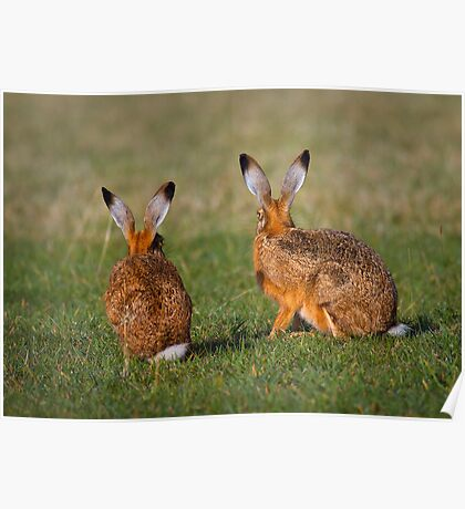Hares Have Ears Poster
