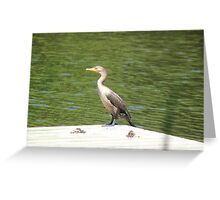 Juvenile double-crested cormorant Greeting Card