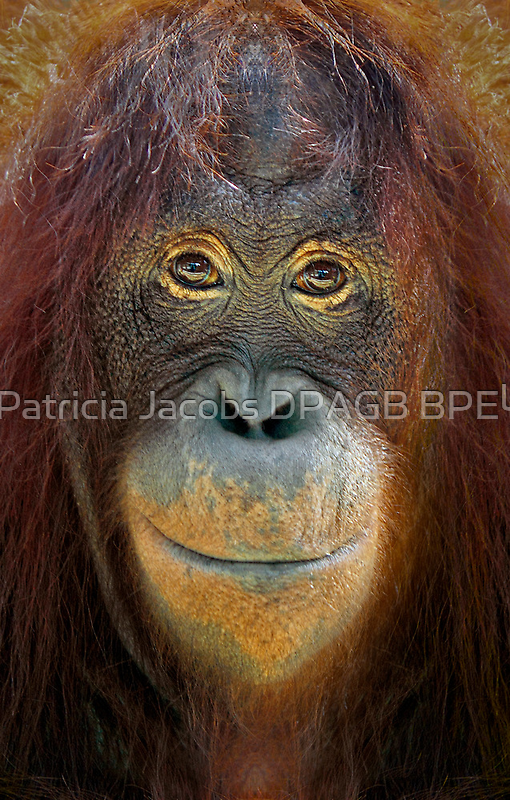 You Looking At Me by Patricia Jacobs CPAGB LRPS BPE3
