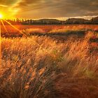 Field of Sunset and Grass by Owed To Nature