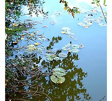 Lilypad Reflections Photographic Print