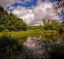 Stover Country Park in Colour by Jay Lethbridge