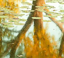 Autumn Reflection.  by Sherstin Schwartz
