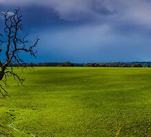 Country Victoria Tree in grass field. by hangingpixels
