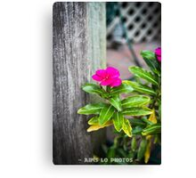 Hot Pink! Canvas Print
