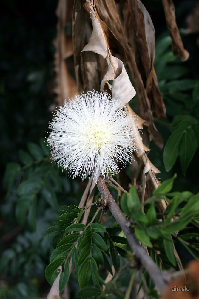 A Native Australian by -aimslo-