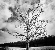 Black and White Alone Dead Tree on the highway by hangingpixels