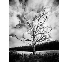 Black and White Alone Dead Tree on the highway Photographic Print