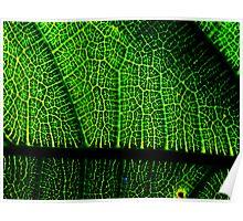 Leaf Veins 2 - photoshop Poster