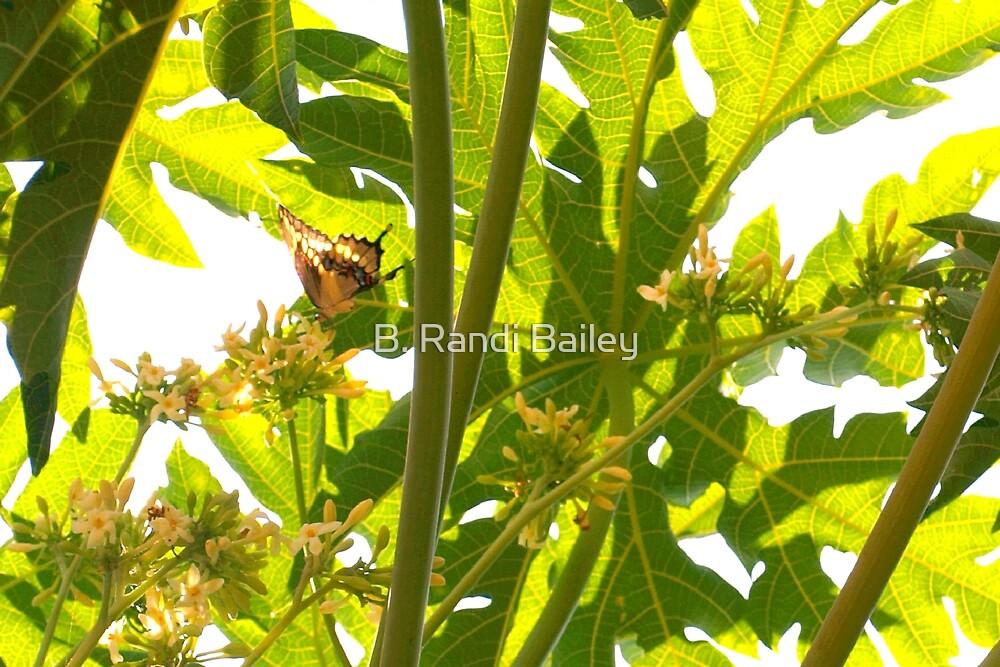 Butterfly in papaya blooms by ♥⊱ B. Randi Bailey