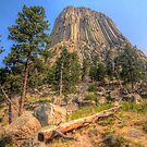 Devil's Tower - Wyoming by Terence Russell
