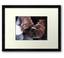 Anna's Paws Framed Print