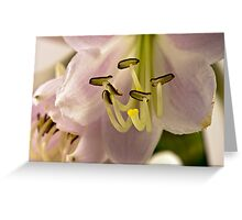 Hosta Stamen Macro  Greeting Card