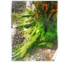 The Moss covered Roots Poster
