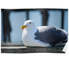 A Resting Seagull Perching Poster