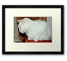 Perched on a bookshelf Framed Print