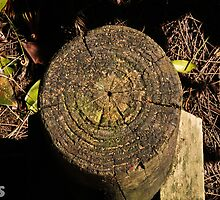 Tree Stump Circles by -aimslo-