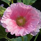 Pretty In Pink Hollyhock by Jamie Peterson