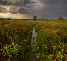 Wet Center by Bob Larson