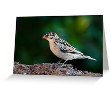 Pin-Tailed Whydah Greeting Card