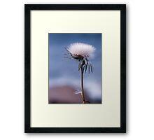 dandelion haze Framed Print