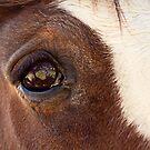 Big Eyes and Big Souls by Josie Eldred