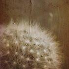 vintage dandelion by © Karin (Cassidy) Taylor