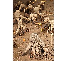 Creatures of The Mud Photographic Print