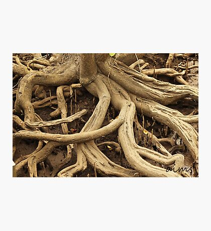 Twisted Tree Roots Photographic Print
