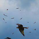 wild and free by Dawn B Davies-McIninch
