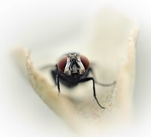 My eyes could see you... by Bob Daalder