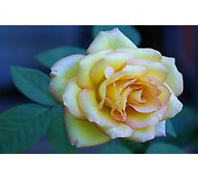 The Friendship Rose Photographic Print