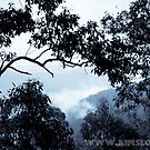 Mist(ree) in The Mountains by -aimslo-