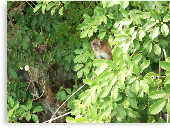 Island Monkey by rosedragon