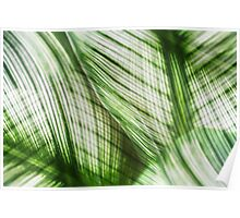 Nature Leaves Abstract in Green Poster